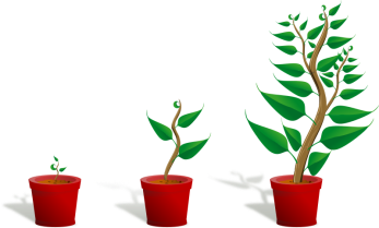 Plant-002-Growing-800px.png